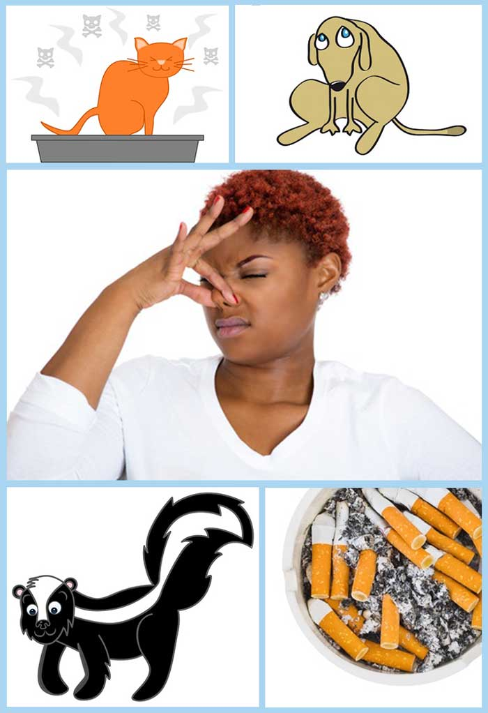 odor-removal-kalamazoo